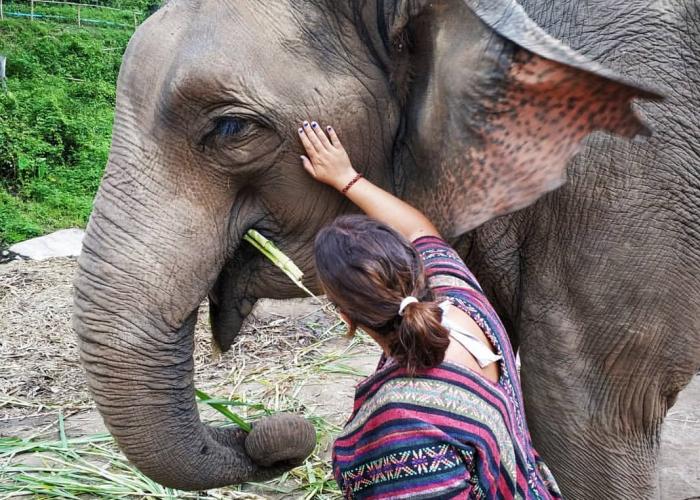Excursión entre elefantes. Tailandia
